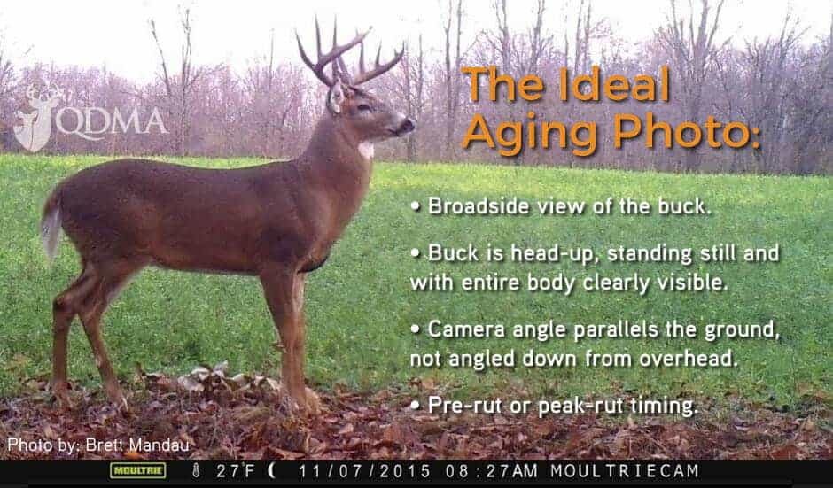qdma ideal aging photo