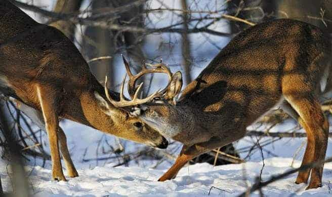 large and small buck sparing